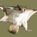flying squirrel removal in VA